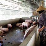 Bảo hiểm nông nghiệp còn nhiều vướng mắc, bất cập