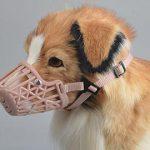 Quy định xử phạt vi phạm hành chính thú y